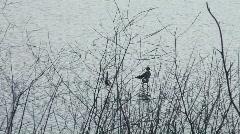 Three wading birds Stock Footage