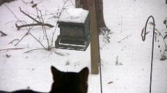 Cat bird watching 06 Stock Footage