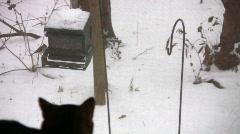 Cat bird watching 07 Stock Footage