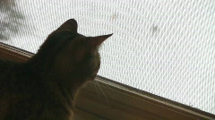 Cat bird watching08 Stock Footage