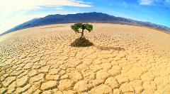 Concept Living Tree in Desert Wilderness Stock Footage