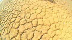 Living Tree in Desert Wilderness Stock Footage