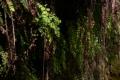 Waterfalls G 06 Fern Web Footage