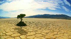 Living Tree in Desert Landscape Stock Footage