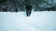 Puppy Adventures 4 Stock Footage