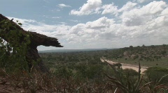 African landscape and elephant Stock Footage