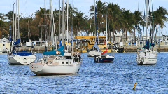 Sailboats in the Marina Stock Footage