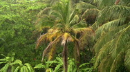 Tropical rain over palm trees Stock Footage
