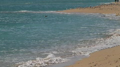 Miami Beach Shoreline Stock Footage