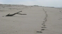 footprints in sand - stock footage