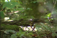 Nature Forrest Floor Stock Footage