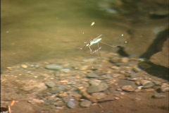 Smoky Mountain River Creek Stream Stock Footage