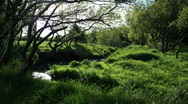 Stock Video Footage of Time lapse of shadows casting on an small Icelandic grove in summer