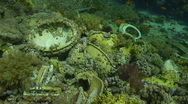 Stock Video Footage of 091213 Underwater wreckage sanitry ware with coral growth