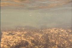Smoky Mountain River Underwater Stock Footage