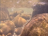 Smoky Mountain River Underwater Stock Footage