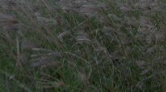 Cat Tails in a meadow - slow motion - clip 2 Stock Footage