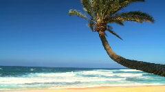 Idyllic Palm Tree Landscape Stock Footage