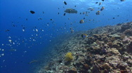 Colorful tropical reef scenic Stock Footage