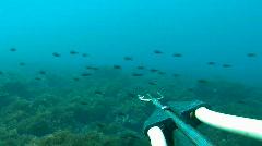 Spearfishing POV (HD) Stock Footage