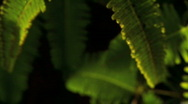 Green Flora in Rainforest Stock Footage