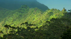 Rainforest Vegetation on Rugged Cliffs, Hawaii Stock Footage