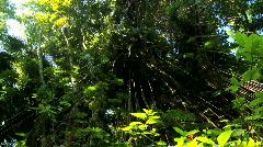 Verdant Rainforest with Audio - stock footage
