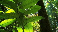 Verdant Rainforest with Audio Stock Footage