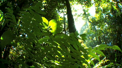 Environmental Rainforest with Audio Stock Footage