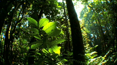 Lush Green  Rainforest Flora with Audio Stock Footage