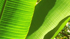 Tight Close-up of Rainforest Flora Stock Footage