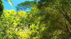 Rainforest Bamboo Trees Stock Footage