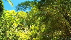 Rainforest Bamboo Trees Arkistovideo