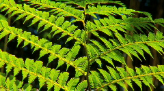 Rainforest Leaves in Close-up Stock Footage