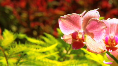 Exotic Rainforest Flowers Stock Footage