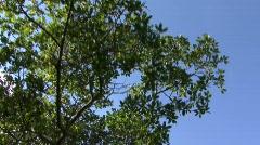 Mangroves2 Stock Footage