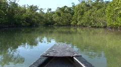 Mangroves Stock Footage