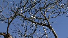 White ibis Stock Footage