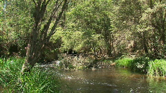 River at the Dandenong ranges, Australia Stock Footage
