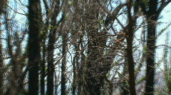 Zoom-out burned tree Stock Footage