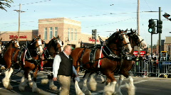 Mardi Gras Budweiser Carriage in Parade - stock footage