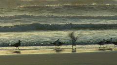 Seagulls on a beach Stock Footage