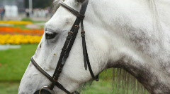Head of black-and-white horsy close up in summer in park Stock Footage