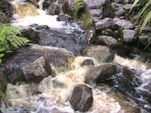 Wild river in the jungle Stock Footage