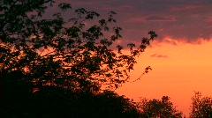 Sunset time lapse whit tree - stock footage