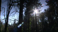 Oregon forest pan Stock Footage