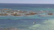 Baja Pelicans Stock Footage