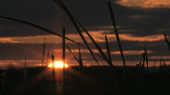Bullrush sunset time lapse 001 Stock Footage