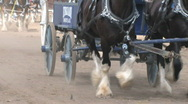 Clydesdale Horses Stock Footage