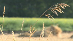Prairie grass stalk rack focus 001 - stock footage